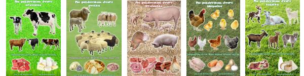 b4ba41b4d Na gazdovskom dvore - Domáce zvieratá, ich mláďatá a hospodársky úžitok.
